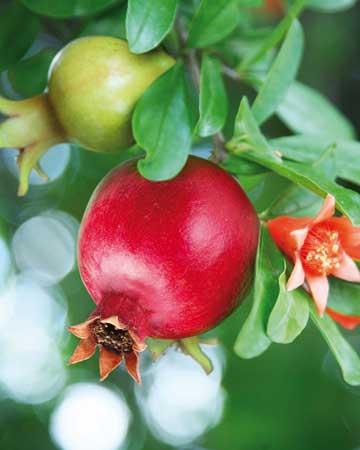 Ρόδι: ένα φρούτο θησαυρός