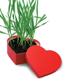 Δώρο Αγίου Βαλεντίνου γλάστρα – καρδιά