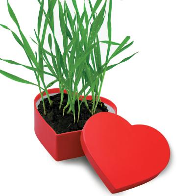 Δώρο Αγίου Βαλεντίνου γλάστρα- καρδιά
