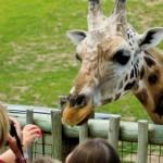 Αττικό Ζωολογικό Πάρκο, Γίνετε Φίλος & Υιοθετήστε ένα Ζώο!