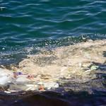 Έρευνα: «Αυξάνεται η Ευαισθησία των Ελλήνων για το Περιβάλλον»
